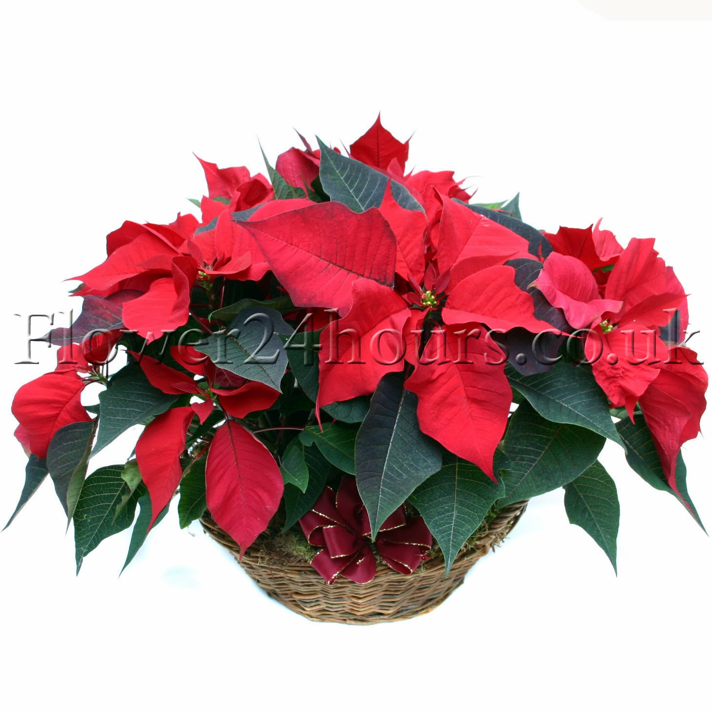 London Flower Delivery Same Day By Flowers24hours Co