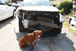 Pets Escape Auto Accident Injuries Thanks to Sleepypod's Innovative...