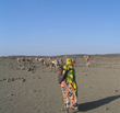 PCI Receives Google Award Using Satellite Data to Help Pastoralists...