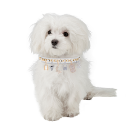 LazyBonezz Charm Dog Collar