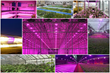 LumiGrow Advances Spectral Science with Successful 2014: Horticultural...