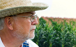 Farmers projected to lose millions due to GMO tainted corn