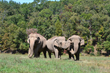 Elephant Sanctuary in Tennessee Achieves Accreditation with Global...