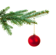 Dangers of Bringing in Christmas Tree Bugs Discussed in Recent Article From Clean Crawls