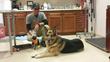 Best Friends Animal Society's John Garcia offers Bela the dog a toy