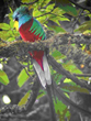 Naturalist Journeys Announces New Southern Costa Rica Birding and...