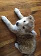 El Portal Sedona Hotel Announces Partnership with Local Pet Rescue...