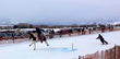 A skijoring athlete rounds a turn at Melody Ranch in one of several WinterFest horse events in Jackson Hole.