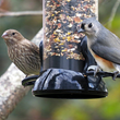 Droll Yankees helps bird watchers understand how wild birds in winter...