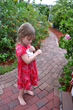 Little guest of Lemon Tree Inn joins the fun of releasing ladybugs into the garden.