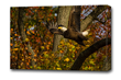 Virginia Photographer Releases Limited Edition Bald Eagle Print