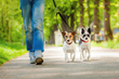 Dallas-based Park Cities Pet Sitter Explains Why Daily Dog Walk...