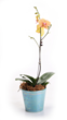 Orchid, Costa Farms, National Houseplant Appreciation Day