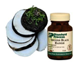 Human Trial Supports the Detoxification Action of Spanish Black Radish