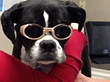 Oakbrook Animal Hospital - Laser Therapy