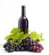 Pacifica Wine Division Releases New Report On Recent Winery and...