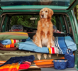 Pendleton and Carolina Pet Collaborate on Luxury Lifestyle Pet Collection