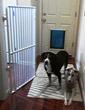 Indoor Pet Gate