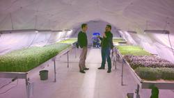 Growing Underground Valoya LED lights