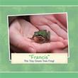 """Patricia Tiegs releases """"Francis"""""""
