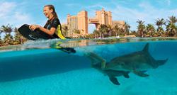 Atlantis Dolphin Cay Deep Water Interaction