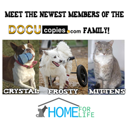 DocuCopies.com donated $1K to HomeForLife.org and sponsored three animals.
