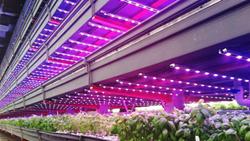 Illumitex LED grow lights at FarmedHere