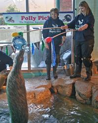 Maritime-Aquarium-Seal-SuperBowl-Pick