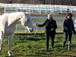 Personal Growth at Berkshire HorseWorks