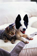 Austin's Wells Branch and South Branch Pet and Bird Clinics Offering 20% Discount on Pet Dental Cleanings During February