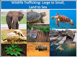 Wildlife Trafficking: Large to Small, Land to Sea