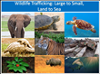 U.S. Wildlife Official's Denunciation of Illegal Wildlife Trade Launches Marstel-Day's Wildlife Conservation Awareness Campaign