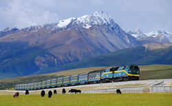 Qinghai Tibet Railway travel