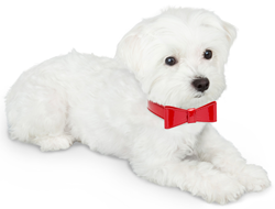 Red Bow Tie Collar
