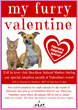 Find Your Furry Valentine for No Adoption Fee at the Stockton Animal...