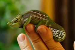 E3 PIEP Chameleon