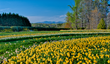 Discover the Beauty of Nature's Own Spring Bouquetat Gibbs Gardens