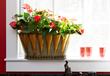 Anthurium, Costa Farms, Valentine's Day plant