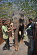 Blind Circus Elephant, Suzy, is First Rescue in Campaign to Place all of India's 67 Remaining Circus Elephants into Rescue Centers