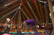 Suzy in the circus, prior to rescue