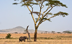 9-day safari adventure through the unique landscapes of Tanzania (Photo courtesy of National Geographic Expeditions)