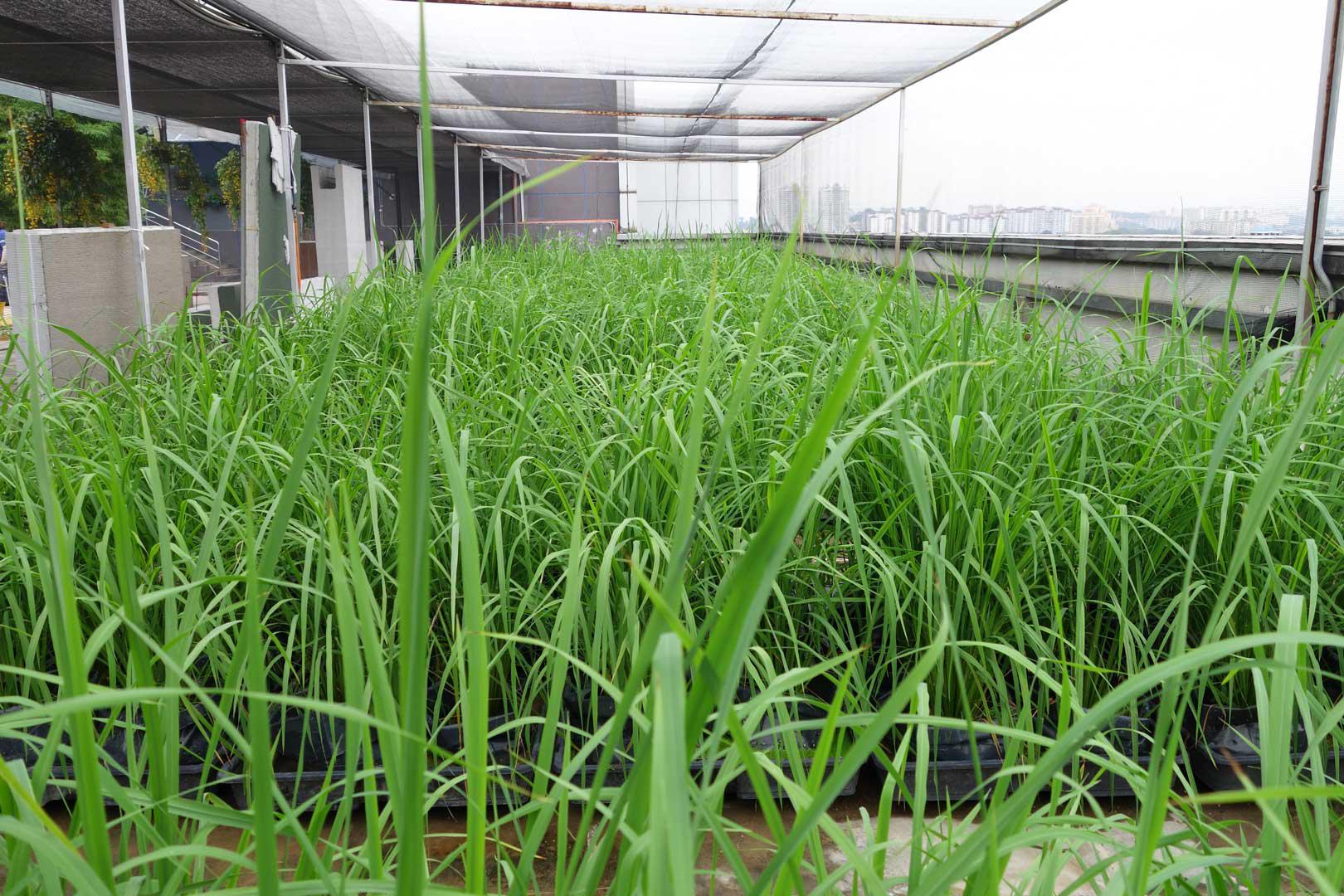vivogrow herb pot plant driven technology to meet growing global demand for self grown herbs. Black Bedroom Furniture Sets. Home Design Ideas