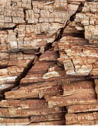 http://en.wikipedia.org/wiki/Wood-decay_fungus
