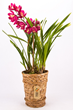 Cyma Orchids Purchases 5,000 Handmade Orchid Baskets from Victims of 2010 Earthquake in Haiti – Provides Much-Needed Jobs for Basket Makers