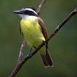Guests of Costa Rica Resort Enjoy Exotic Birdwatching