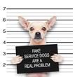 Dogington Post Exposes Huge Fake Service Dog Scam