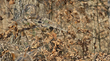 Camo Form Camo Wrap Now Available in Realtree Xtra Camouflage Pattern