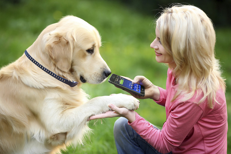 High Tech Pet Dog Training Collars For A New Generation