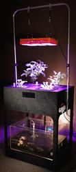 Tranzbyte to Unveil Home-Scale Aquaponics System