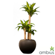 Ambius South Africa launches an Online Indoor Plants Catalogue